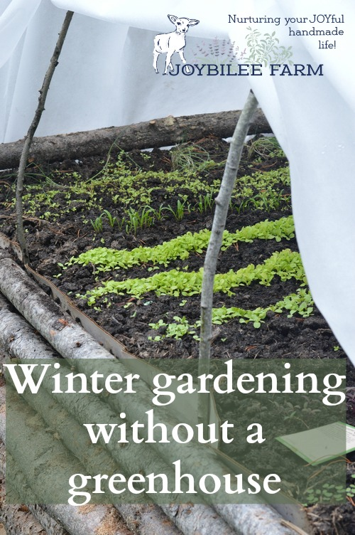 Winter Gardening Without a Greenhouse | Joybilee® Farm | DIY ... on winter potted plants, winter shade plants, winter blooming plants, winter porch plants, winter container plants, winter hibiscus, winter yard plants, winter deck plants, winter perennial plants, winter interest plants, winter flowering plants, winter fragrant plants, winter house landscaping, winter planter plants, winter house art, winter hardy plants, winter outdoor plants, winter house cookies, great winter plants, winter patio plants,