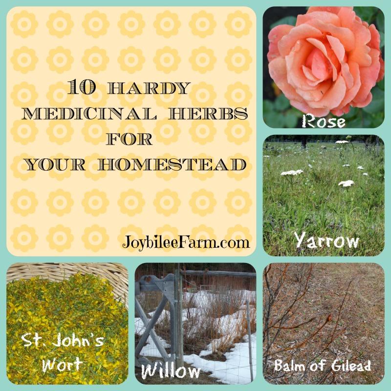 10 Hardy Medicinal Herbs