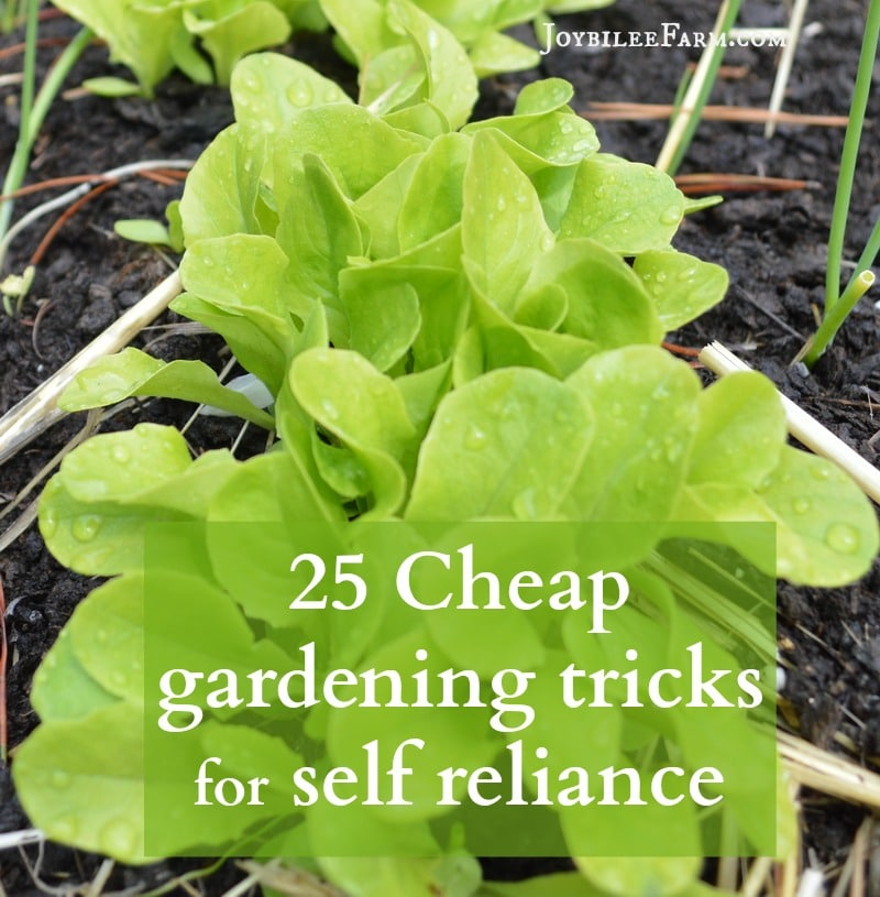 25 Cheap gardening tricks for self reliance sm