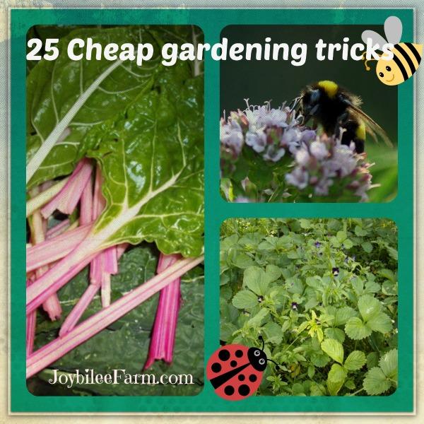 25 Gardening Tricks