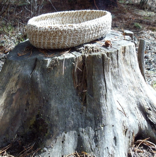 Basket Making Materials : Making pine needle baskets from local materials joybilee
