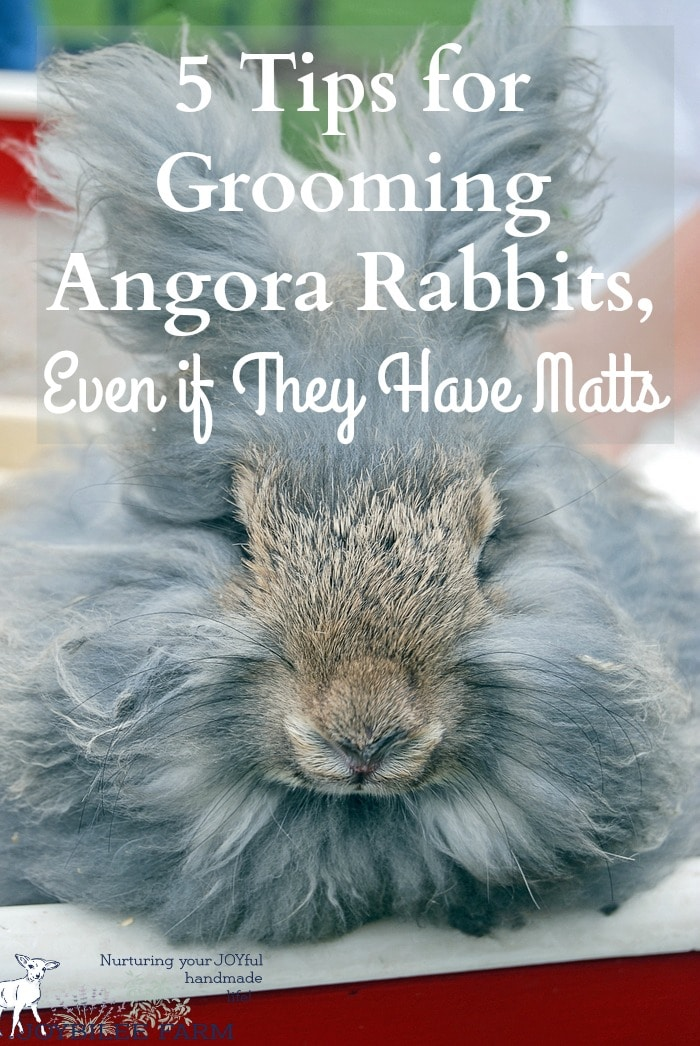 Angora Rabbit care and feeding