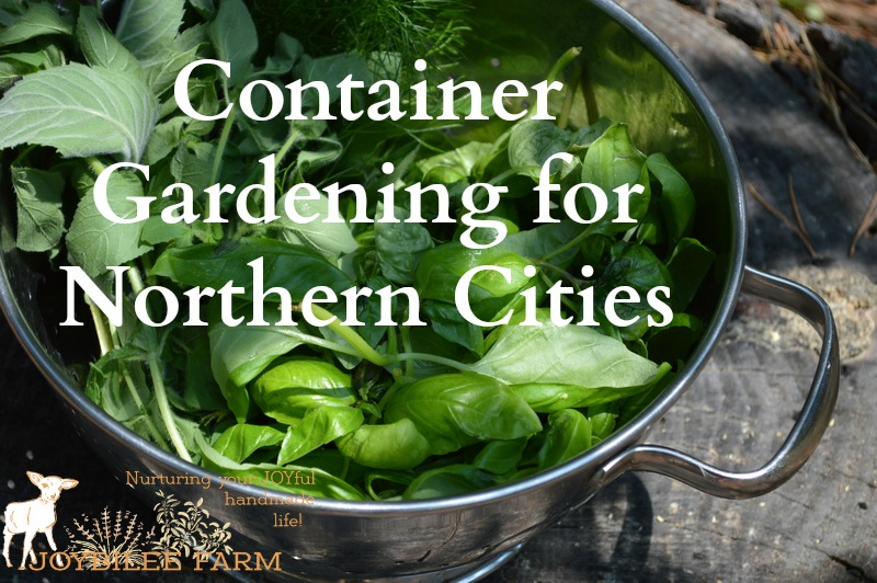 Container gardening in the city or on small suburban lots is one solution to the problem of rising food costs and the need for access to fresh food in the food desert of most cities. But the further North you go, the harder it is to actually be successful on a small lot or on the balcony of an apartment.