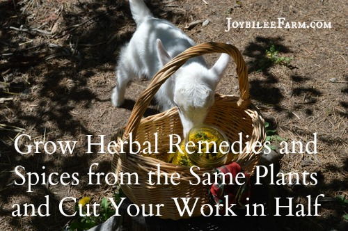 Grow Herbal Remedies and Spices