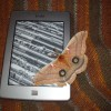 Kindle moth