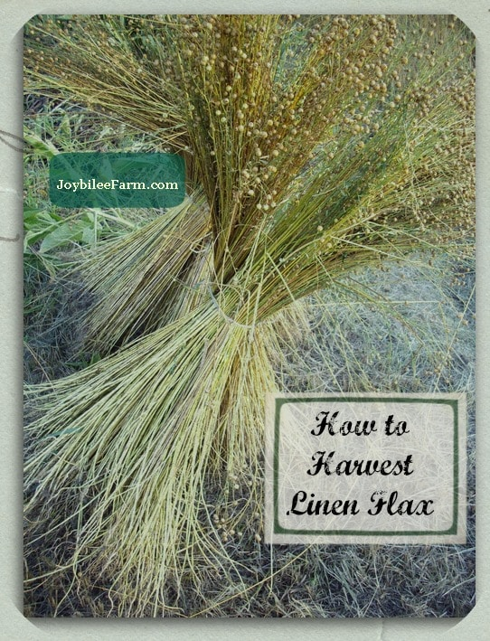 How to Harvest Linen