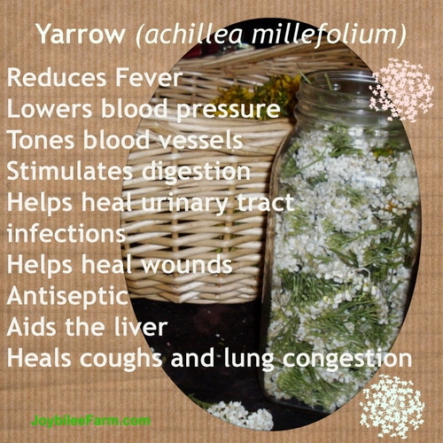 Yarrow actions