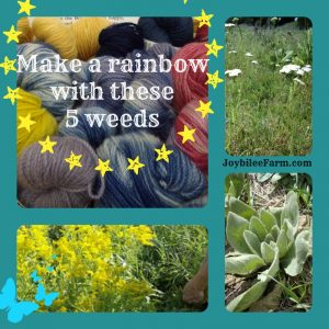 Make a rainbow with these 5 weeds (Natural Dyes)