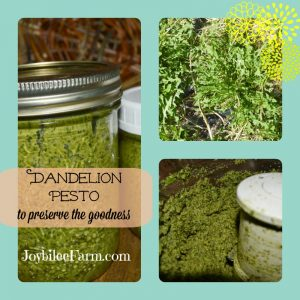 Make Dandelion pesto and save the goodness for later