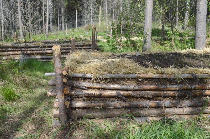 Hugelkultur forest gardening 2