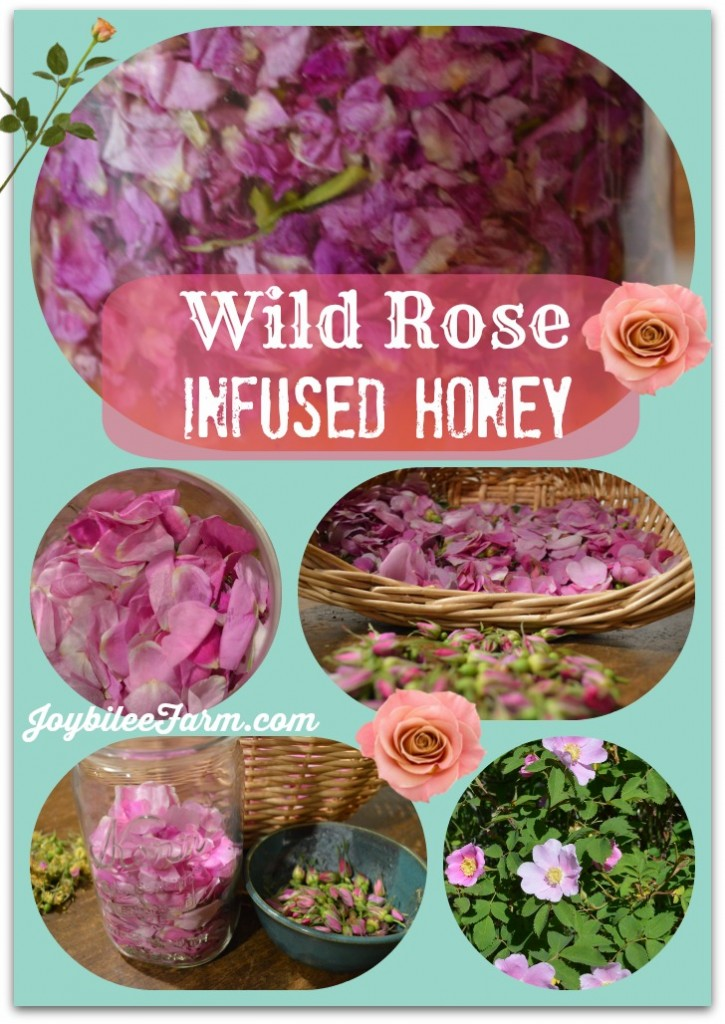 Wild rose infused honey - Joybilee Farm