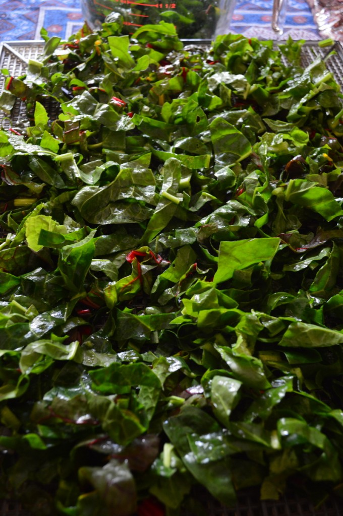 chard on a dehydrator tray