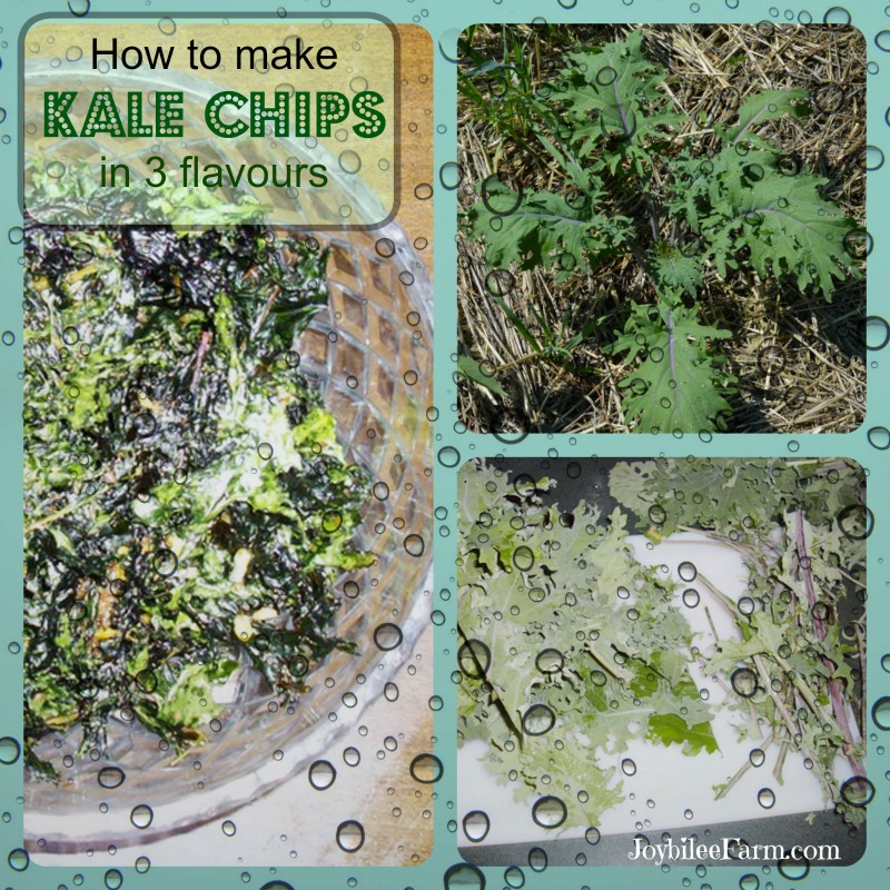 Kale chips in 3 flavours