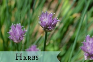 Category: Herbs