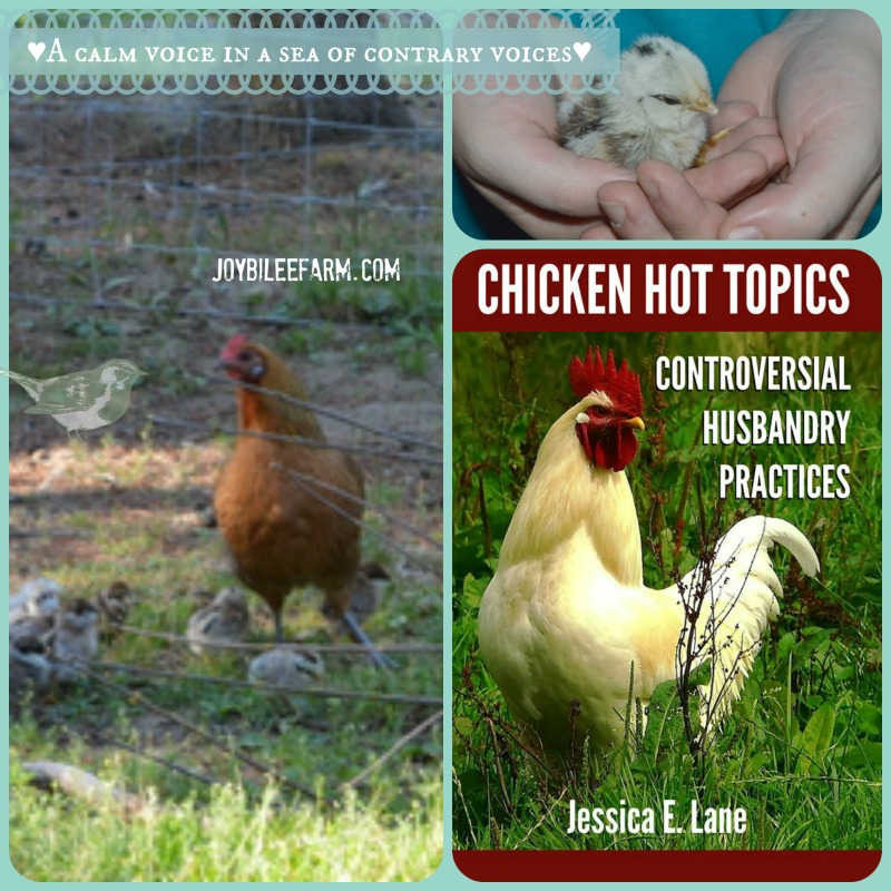 Review: Chicken Hot Topics -- Joybilee Farm