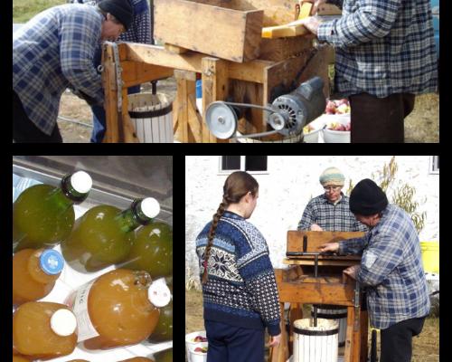 How to make apple cider vinegar -- Joybilee Farm
