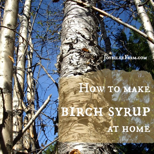 How to make birch syrup at home -- Joybilee Farm