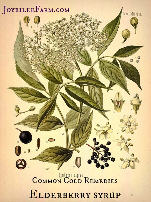 Remedies for the Common Cold -- Elderberry Syrup -- Joybilee Farm