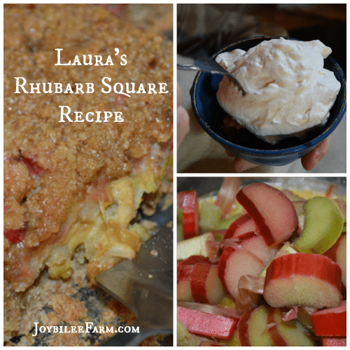 Rhubarb Square Recipe - Joybilee Farm