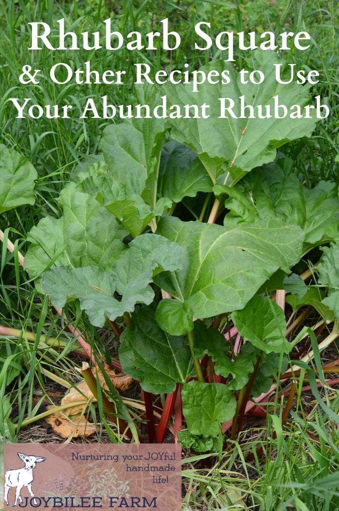 Rhubarb recipes including this classic rhubarb square, to help you enjoy your abundant rhubarb.
