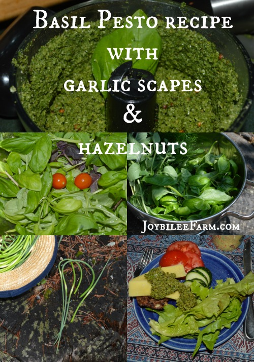Basil Pesto recipe with garlic scapes and hazelnuts