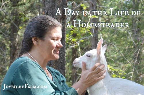 Real Life Homesteading -- Joybilee Farm