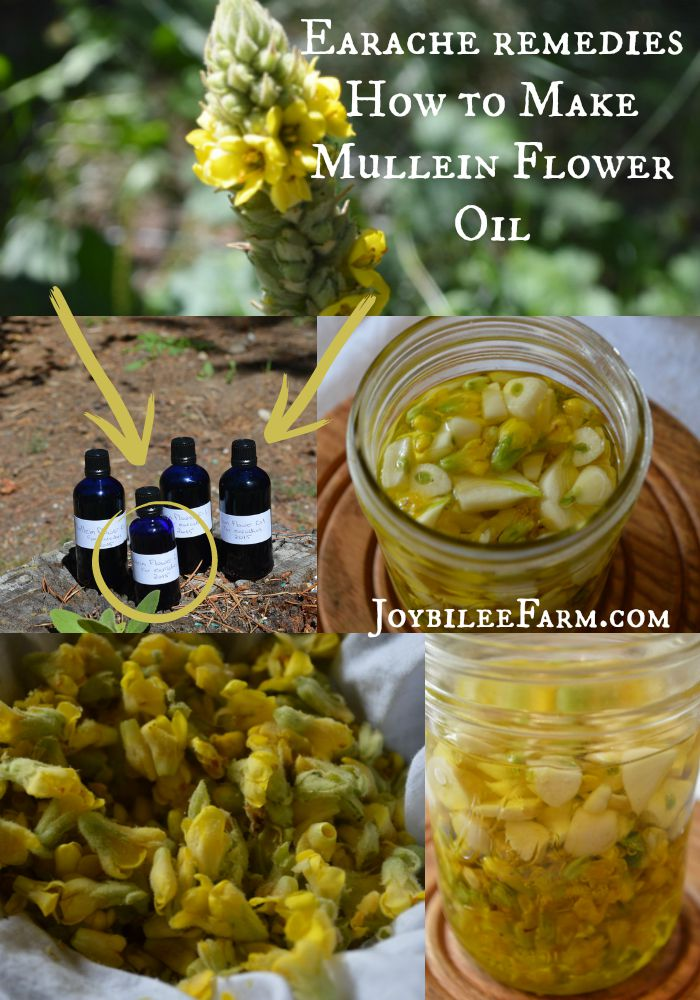 Earache remedies – How to Make Mullein Flower Oil -- Joybilee Farm