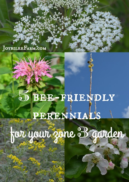 5 bee friendly perennials for your zone 3 garden for better biodiversity 5 bee friendly perennials mightylinksfo