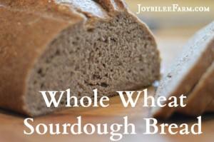 Whole wheat sourdough bread recipe