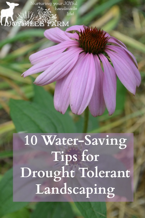how to create a drought garden
