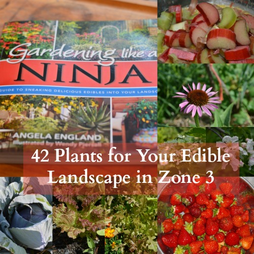 I combed through the pages of Gardening Like a Ninja specifically looking for plants that those of us in harsh climates could use in our Ninja exploits. Here's 42 plants that are both edible and beautiful that you can grow in your zone 3 Ninja Garden!