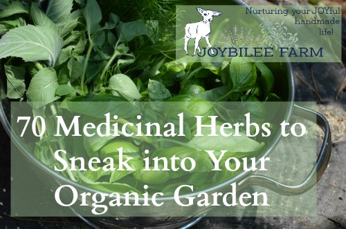 70 medicinal herbs to sneak into your organic garden joybilee farm diy herbs gardening - Medicinal herbs harvest august dry store ...