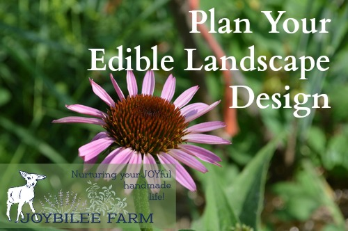 In edible landscape design your foundational plants are perennial fruit and nut trees that give 3 or 4 season interest, medium size perennial herbs and flowers that draw the eye or the nose, and annual vegetables and herbs that fill in the borders. For new gardeners that have to please a Home Owners Association, designing an edible garden that's also ornamental can seem overwhelming.