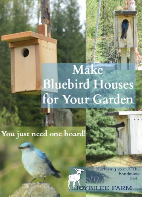 Make a bluebird house from a single board.