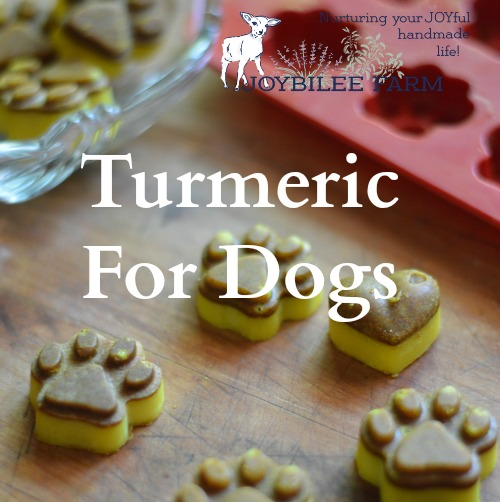 Now I don't know about you, but I don't have time to fiddle with pet treats every day. Let's make it easy so you actually will do this for your dog or cat. These are a make once and serve up daily turmeric chews. They take less than 15 minutes to make, plus an overnight chill period. They offer turmeric for dogs in an easily absorbable way. They are convenient for you. They are therapeutic for both dogs and cats. And they are super inexpensive to make, with only 4 ingredients.