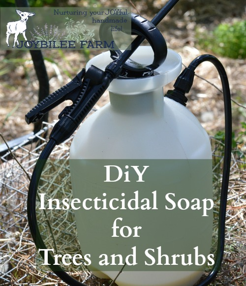 This insecticidal soap spray can be made at home for only a few dollars. It kills garden pests by coating their bodies with oil. Since insects breathe through their skin, it smothers them. Then the oil stays on the leaves making them inhospitable to further predation. But it won't harm pets or humans. Avoid spraying on fruit shrubs with open flowers and pollinators at work. This can be used on fruit trees, shrubs, canes, and vines. Avoid spraying on the vegetable garden, as the oil will cling to the leaves of your vegetables. It won't harm the vegetables, but it may make them taste funny. For the vegetable garden hand picking and using diatomaceous earth is more effective than a foliar spray. This recipe makes enough to fill a 1 gallon pressurized garden sprayer. This is the pressurized sprayer I have.