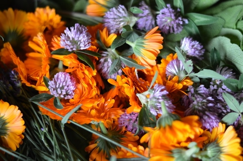 calendula sage and clover harvest