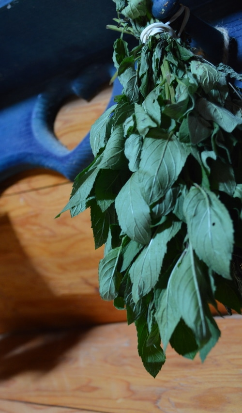 mint-hanging-to-dry