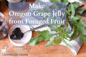 Make Oregon Grape Jelly from Foraged Fruit