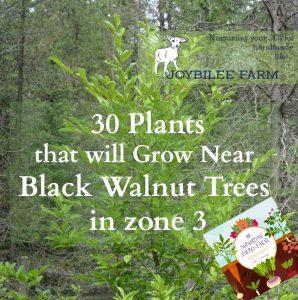30 Plants That Will Grow near Black Walnut Trees, in zone 3