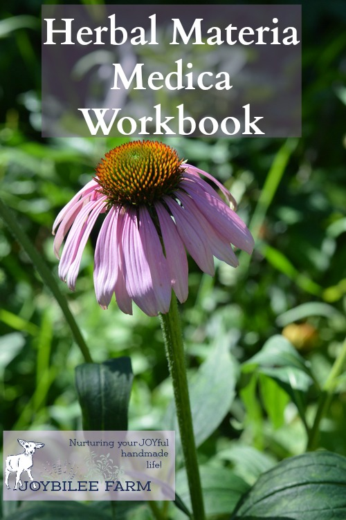 How to study herbs by focusing on one herb at a time. This will jump start your herbal learning and allow you to quickly master medicinal herbs.