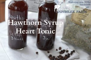 How to Make the Most Effective Hawthorn Berry Syrup Heart Tonic