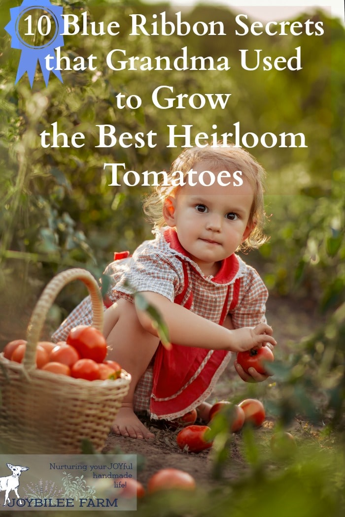 With these 10 secrets you, too, can get that coveted blue ribbon for the best heirloom tomatoes.