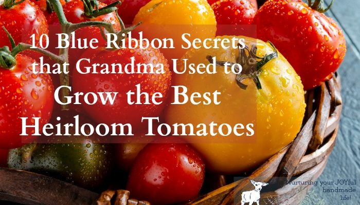 10 Blue Ribbon Secrets that Grandma Used to Grow the Best Heirloom Tomatoes