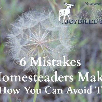 6 Newbie Homestead Mistakes You Can Avoid
