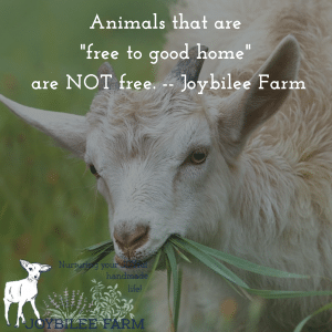 Animals that are free to a good home are never free. Avoid the top homestead mistakes and build a thriving homestead.