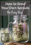 Sprouts in a Mason Jar