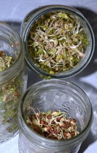 top view of various types of sprouts in jars, adzuki beans, and two sprouting mixes - how to grow sprouts at home