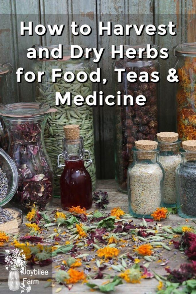lots of dried herbs in bottles