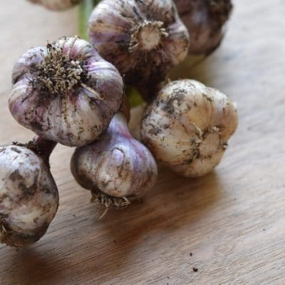 Garlic self-sufficiency: How to grow and preserve garlic